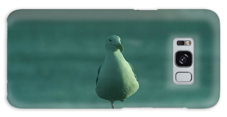 Galaxy S8 Case featuring the photograph One Legged Sea Gull by Jeff Swan