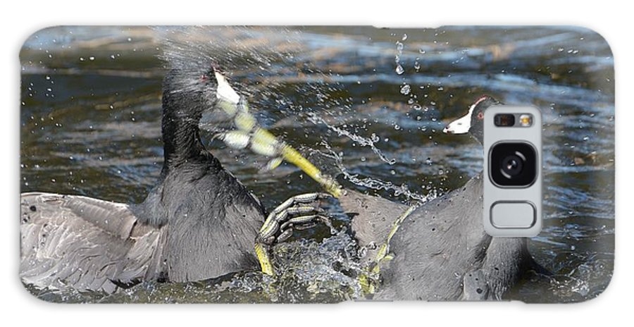 American Coots Galaxy S8 Case featuring the photograph One Two Punch by Fraida Gutovich