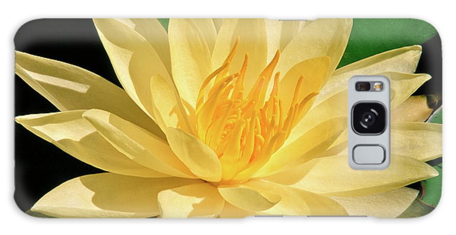 Water Lily Galaxy S8 Case featuring the photograph One Water Lily by Ed Riche