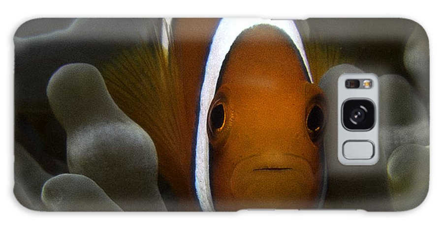 Nature Galaxy S8 Case featuring the photograph Orange Anemone Fish In Pale Anemone by Gary Hughes