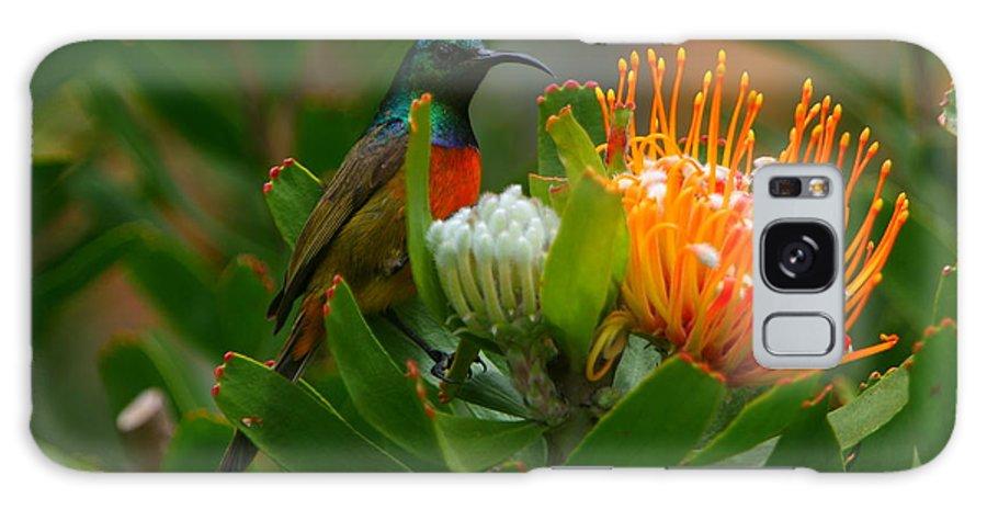 Sunbird Galaxy S8 Case featuring the photograph Orange-breasted Sunbird II by Bruce J Robinson