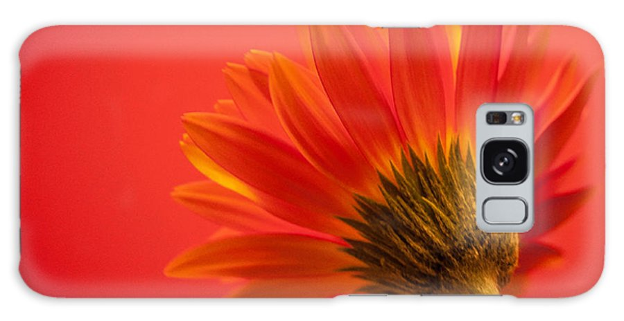 Flower Galaxy S8 Case featuring the photograph Orange Delight by Bianca Nadeau