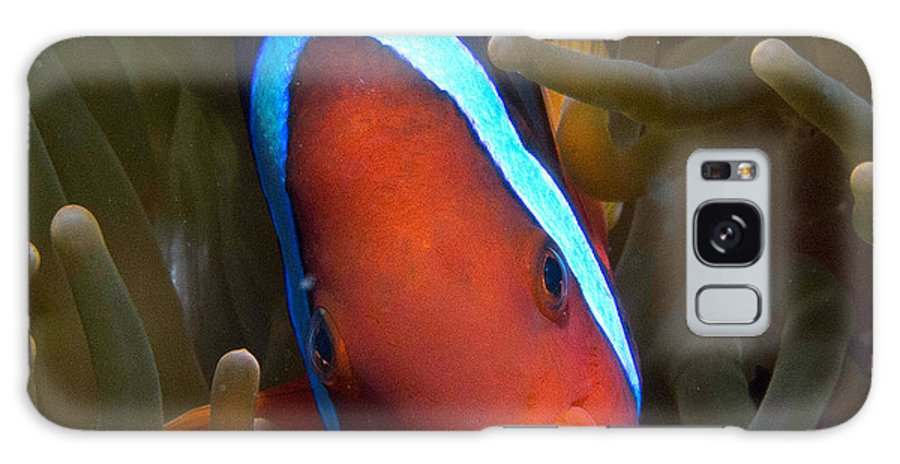 Nature Galaxy S8 Case featuring the photograph Orange Face Anemonefish by Gary Hughes