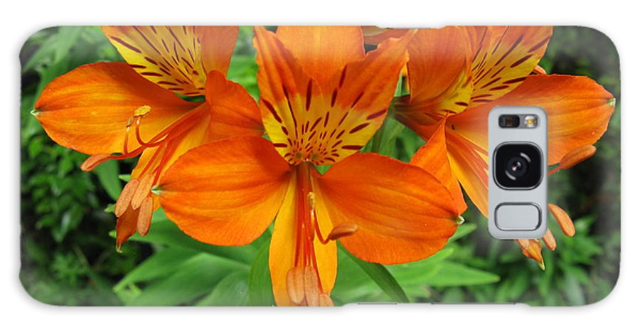 Flowers Galaxy S8 Case featuring the photograph Orange Flowers by Danica Stewart
