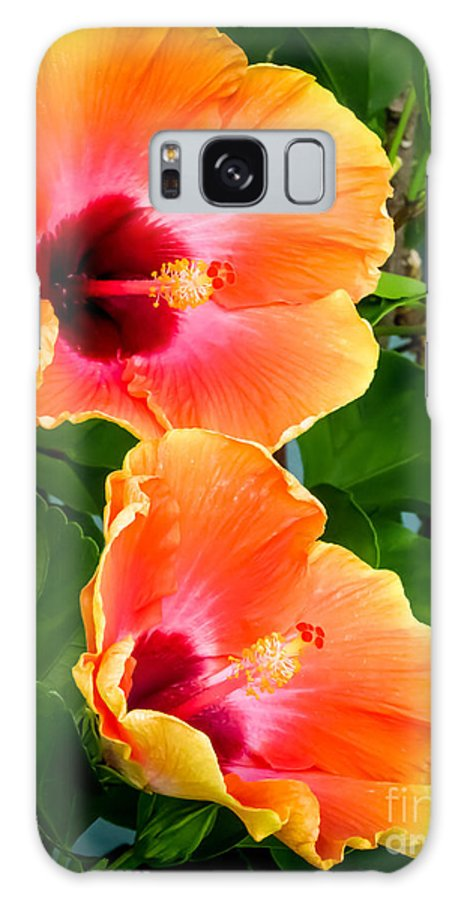 Flowers Galaxy S8 Case featuring the photograph Orange Hibiscuses by Zina Stromberg