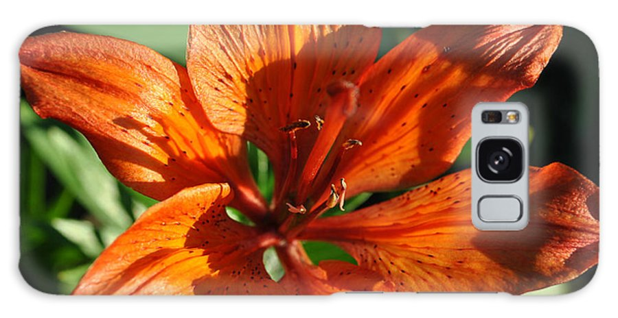 Orange Galaxy S8 Case featuring the photograph Orange Lilly by Jim Hogg