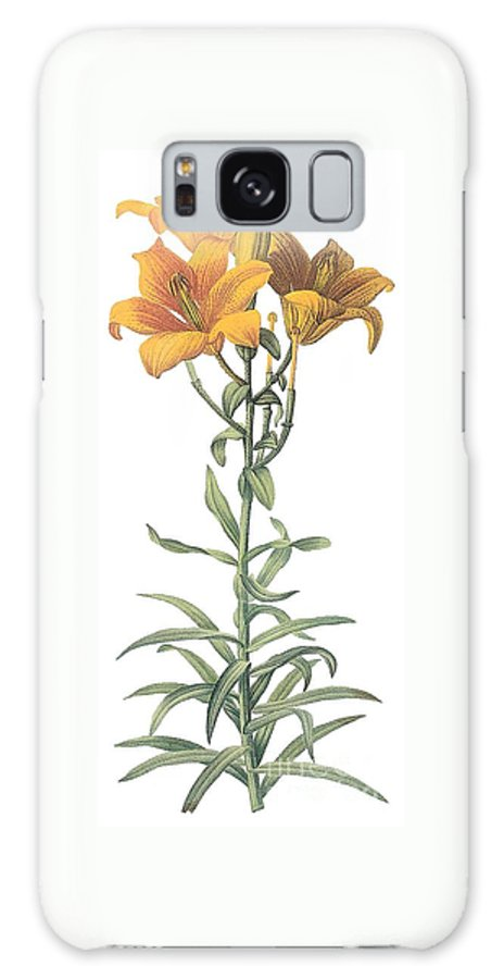 Flower Galaxy S8 Case featuring the drawing Orange Lily by Spencer McKain