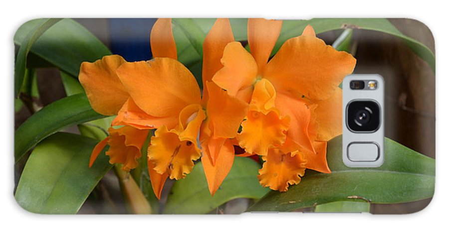 Orange Galaxy S8 Case featuring the photograph Orange Orchids by William Hallett