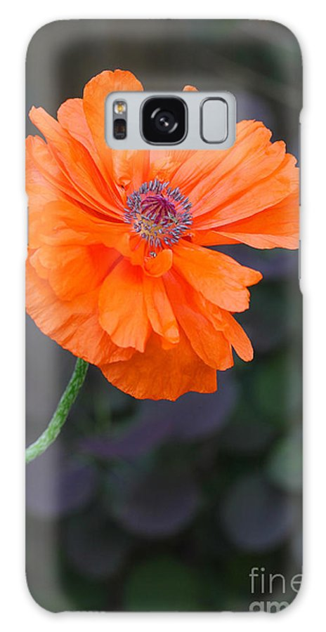 Poppy Galaxy S8 Case featuring the photograph Orange Poppy by Steve Augustin
