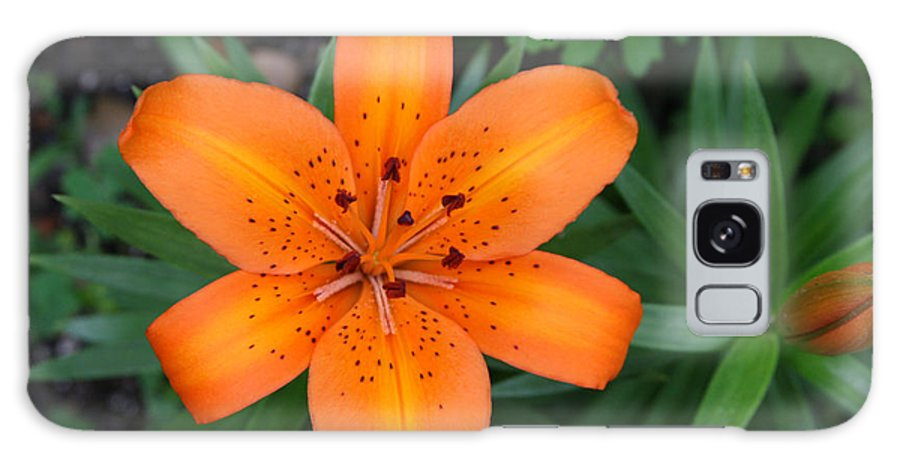 Beautiful Garden Flowers Galaxy S8 Case featuring the photograph Orange Shout by D L Darden