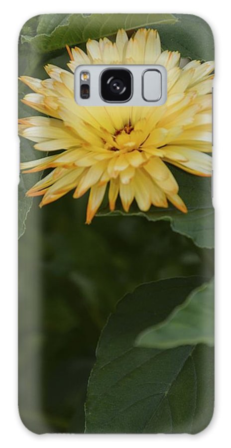Floral Galaxy S8 Case featuring the photograph Orange Tip Pedals by William Hallett
