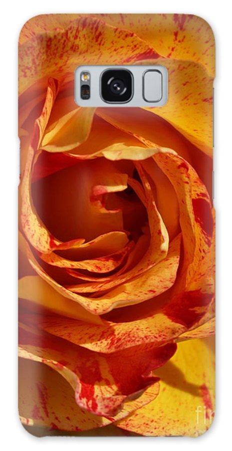 Orange Galaxy S8 Case featuring the photograph Orange Variegated Rose by Jacklyn Duryea Fraizer