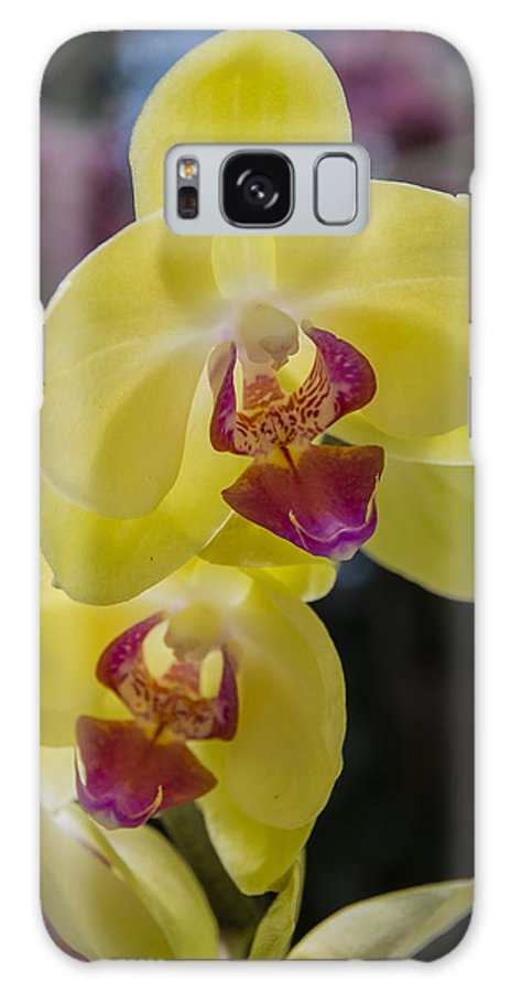 Orchids Galaxy S8 Case featuring the photograph Orchid #5 by Phil Abrams