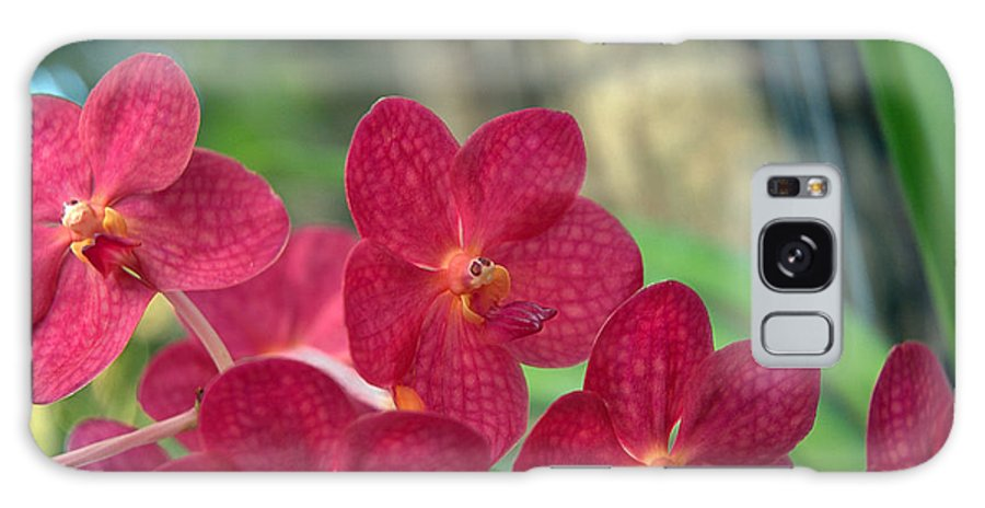 Orchid Galaxy S8 Case featuring the photograph Orchid Bugs by Kathi Shotwell