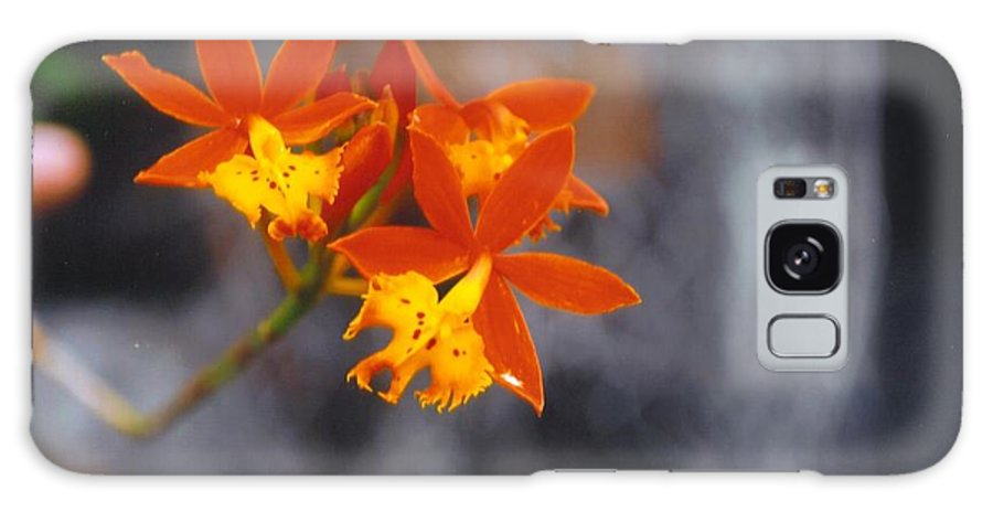 Grown By Me Galaxy S8 Case featuring the photograph Orchid Circus by Robert Floyd