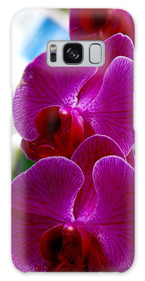 Art For The Wall...patzer Photography Galaxy S8 Case featuring the photograph Orchid by Greg Patzer