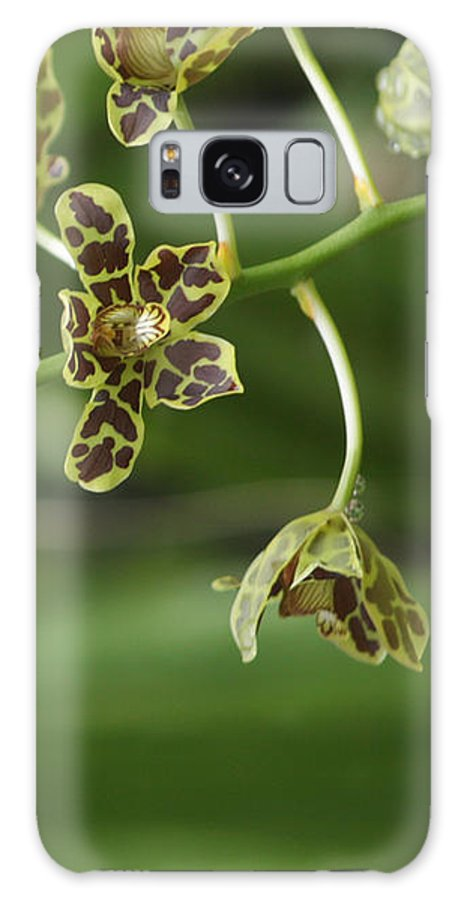 Orchid Galaxy S8 Case featuring the photograph Orchid by Ria Razzauti