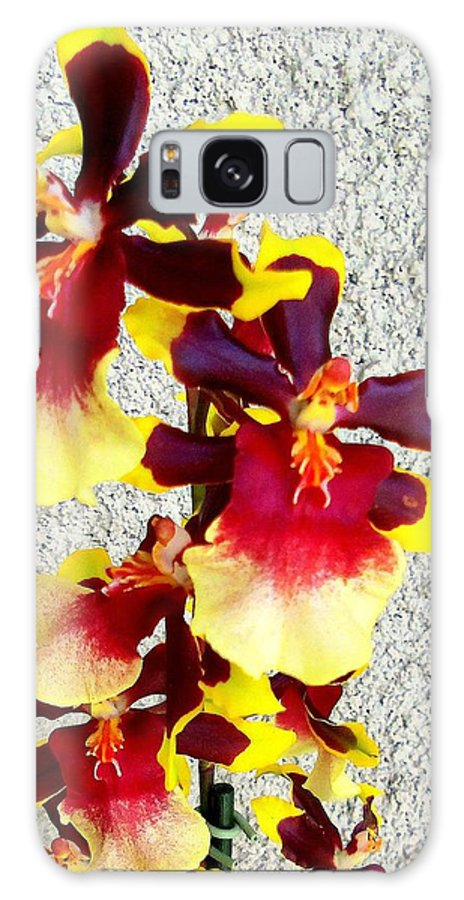 Flower Blooms Galaxy S8 Case featuring the photograph Orchids 17 by Ron Kandt