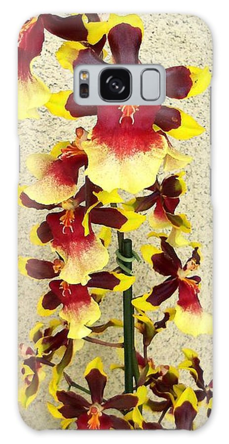 Flower Blooms Galaxy S8 Case featuring the photograph Orchids 18 by Ron Kandt
