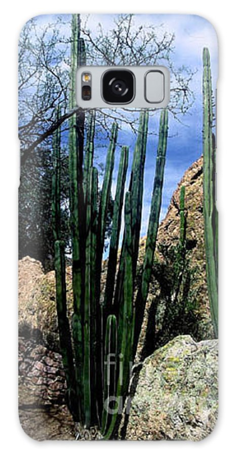 Cactus Galaxy Case featuring the photograph Organ Pipe by Kathy McClure