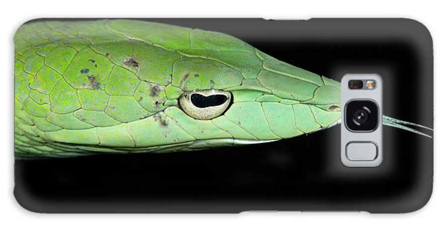 Ahaetulla Prasina Galaxy S8 Case featuring the photograph Oriental Whip Snake by Scubazoo
