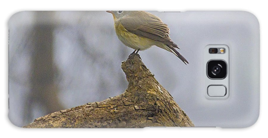 Bird Galaxy S8 Case featuring the photograph Oriental White Eye by Pravine Chester