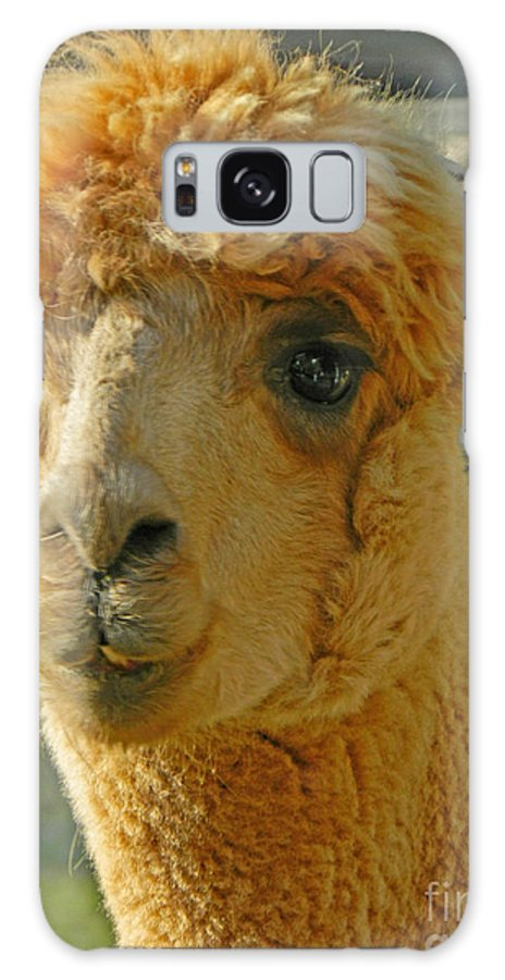 Orion The Alpaca Galaxy S8 Case featuring the photograph Orion The Alpaca by Emmy Vickers