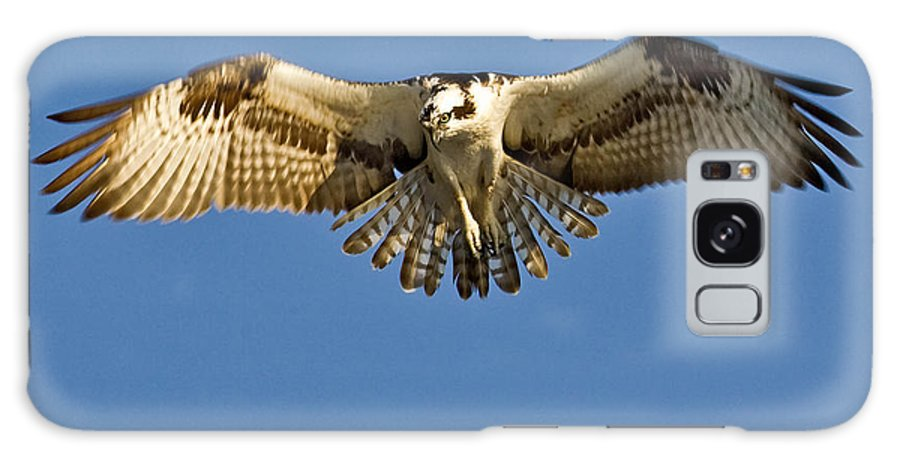 Osprey Galaxy S8 Case featuring the photograph Osprey Hovering by Jerry Fornarotto