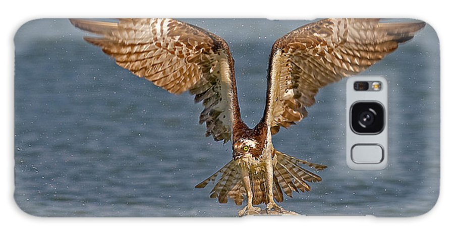 Osprey Galaxy S8 Case featuring the photograph Osprey Morning Catch by Susan Candelario