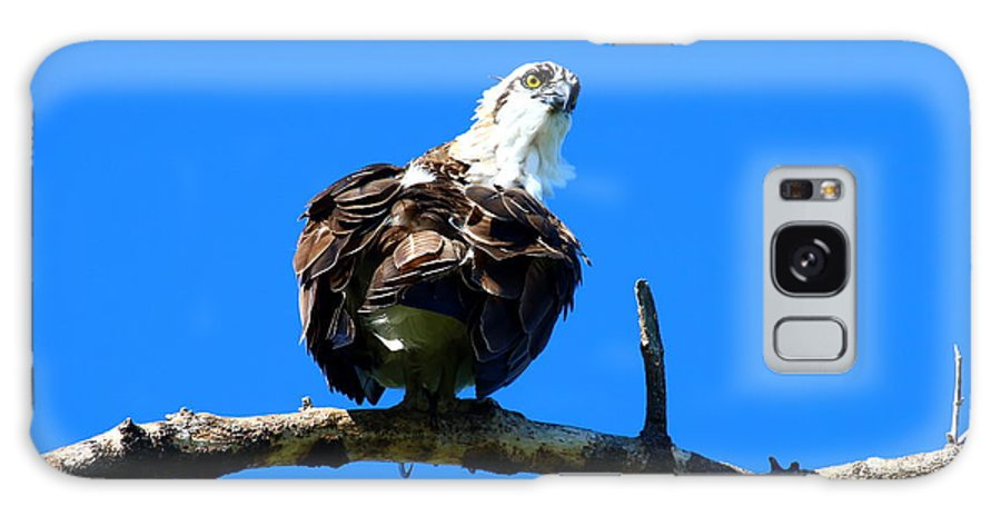 Osprey Galaxy S8 Case featuring the photograph Osprey On A Branch by Christiane Schulze Art And Photography