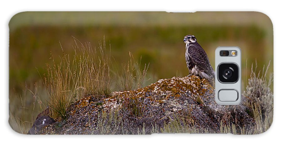 Bird Galaxy S8 Case featuring the photograph Osprey On A Rock  #7626 by J L Woody Wooden