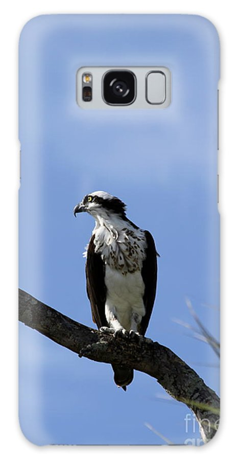 Osprey Galaxy S8 Case featuring the photograph Osprey Outlook by Christiane Schulze Art And Photography