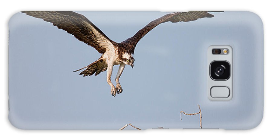 Osprey Galaxy S8 Case featuring the photograph Osprey Returning To Nest by Jerry Fornarotto