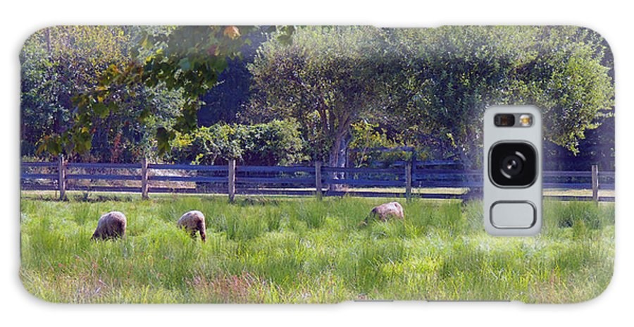 Sheep Galaxy S8 Case featuring the photograph Over In The Meadow by Marian DeSalvo-Rodgers