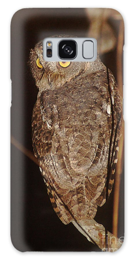Nature Galaxy S8 Case featuring the photograph owl of Madagascar by Rudi Prott
