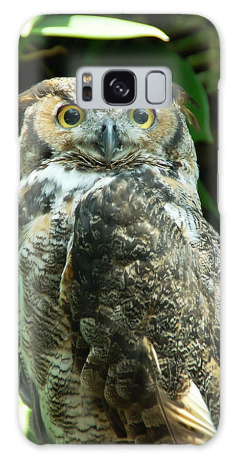 Owl Galaxy S8 Case featuring the photograph Owl Portrait by Aimee L Maher ALM GALLERY