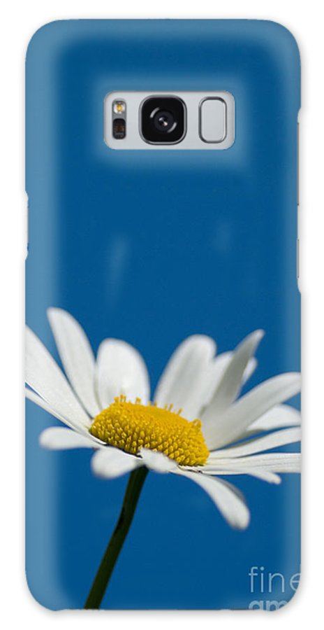 Asteraceae Galaxy S8 Case featuring the photograph Oxeye by Anne Gilbert