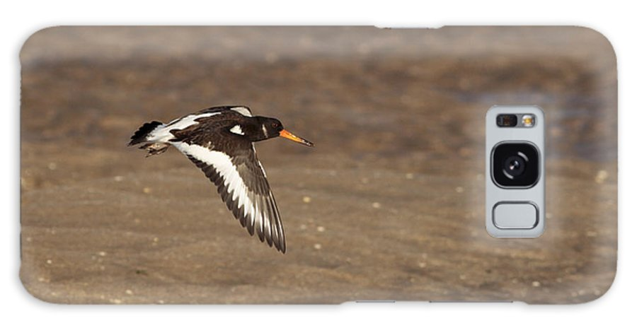 Oystercatcher Galaxy S8 Case featuring the photograph Oystercatcher 2 by Simon Gregory