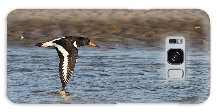 Oystercatcher Galaxy S8 Case featuring the photograph Oystercatcher 3 by Simon Gregory