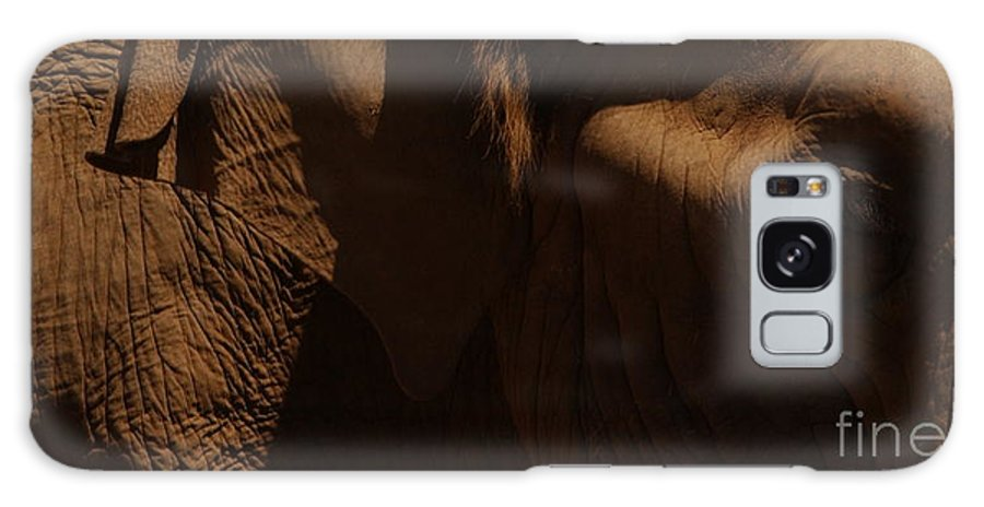 Elephant Galaxy S8 Case featuring the photograph Pachyderm Panorama by Anna Lisa Yoder