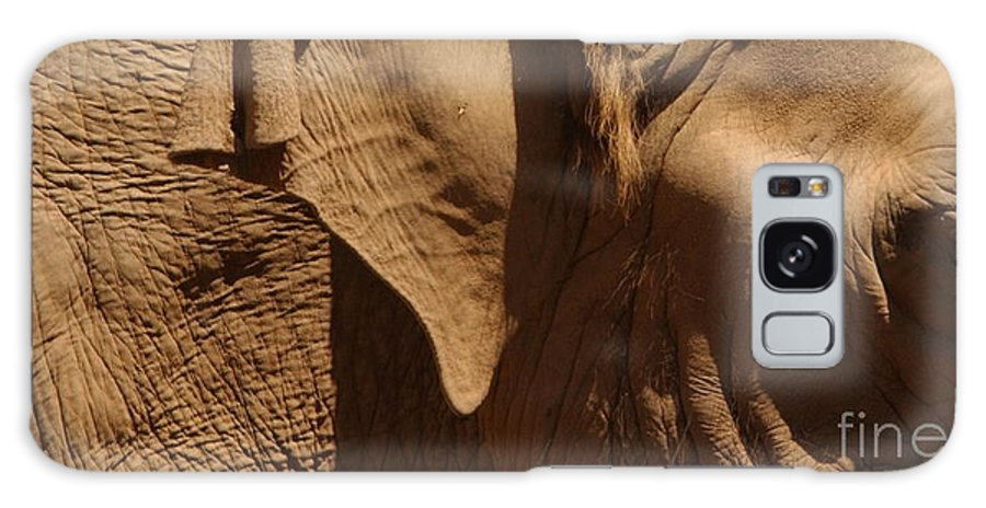 Elephant Galaxy S8 Case featuring the photograph Pachyderm Panorama - San Diego Zoo by Anna Lisa Yoder