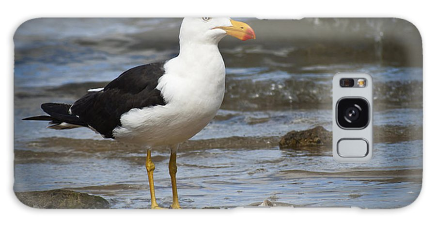 Pacific Gull Galaxy S8 Case featuring the photograph Pacific Gull by Terence Kneale