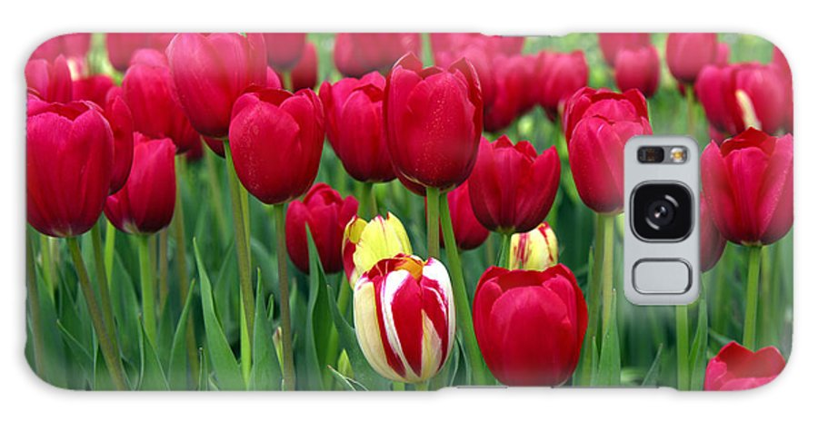 Tulip Galaxy Case featuring the photograph Pacific Northwest Tulips 2 by Keith Gondron