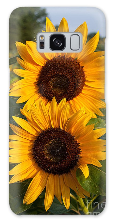 Sunflowers Galaxy S8 Case featuring the photograph Pair Of Sunflowers by Valerie Ryan