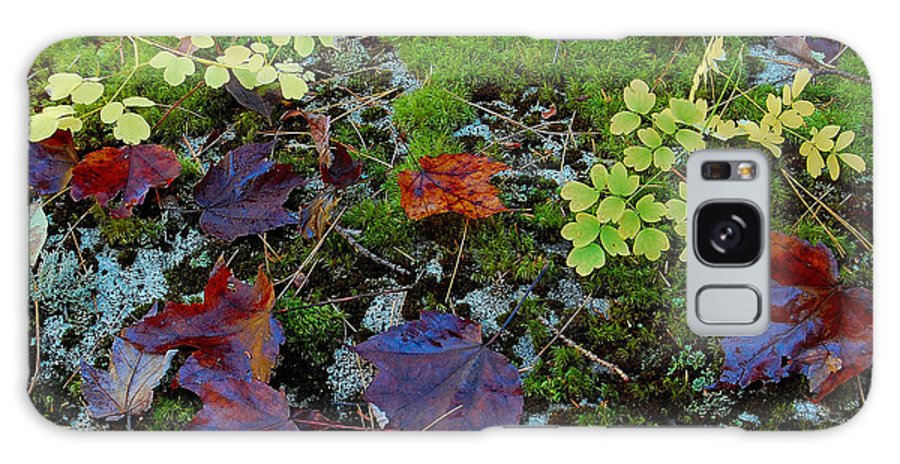 Leaf Galaxy S8 Case featuring the photograph Palette Of Colour by Jim Southwell