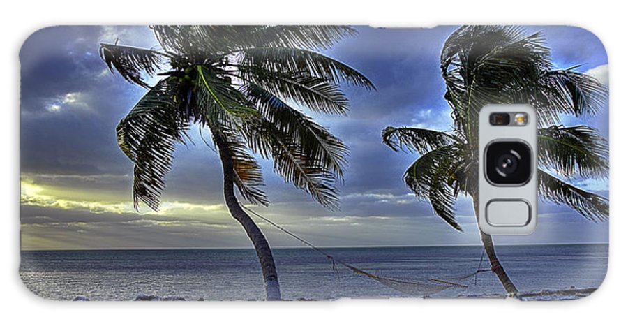 Palm Tree Galaxy S8 Case featuring the photograph Palms by Bruce Bain