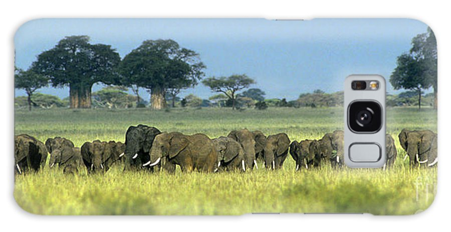 Africa Galaxy S8 Case featuring the photograph Panorama African Elephant Herd Endangered Species Tanzania by Dave Welling