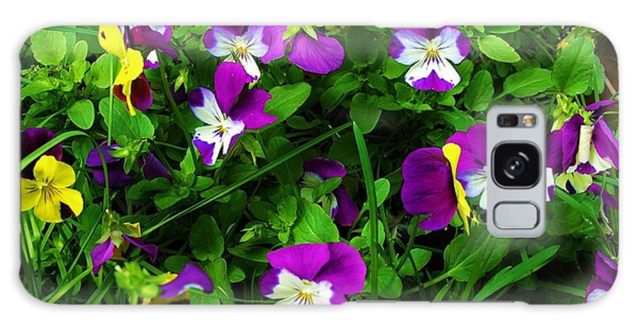 Flower Galaxy S8 Case featuring the photograph Pansies by Sherman Perry