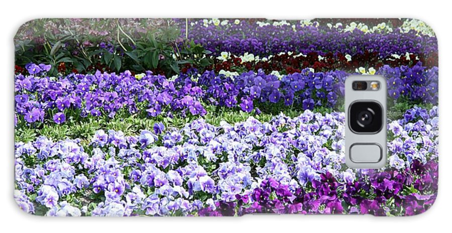 Pansy Galaxy S8 Case featuring the photograph Pansy Field by Christiane Schulze Art And Photography