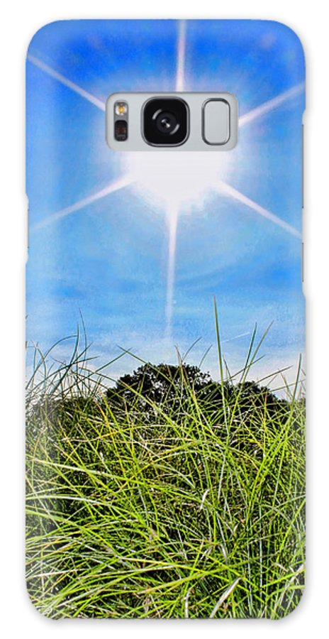 Papyrus Galaxy S8 Case featuring the photograph Papyrus In The Sun by Sylvia Thornton
